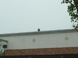hd_rooftop_spotter.jpg