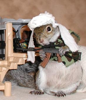 sugarbushsquirrel_binladen.jpg