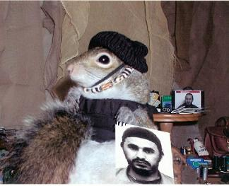 sugarbushsquirrel_zarqawi.jpg