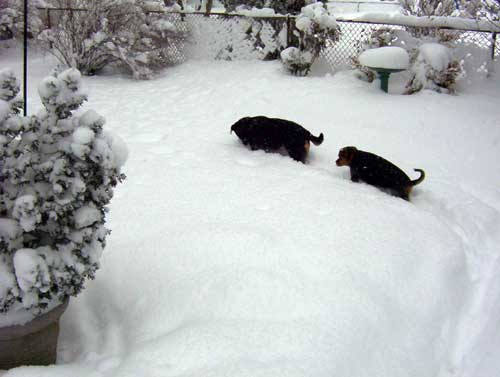 Follow the leader - Dogs in the snow