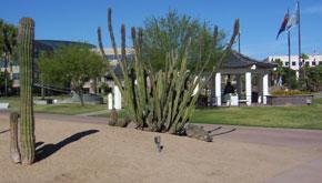 bolin-park-cactus.jpg