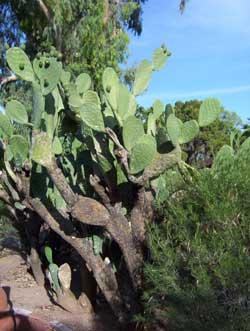 cactus-250.jpg